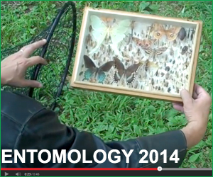 ENTOMOLOGY 2014